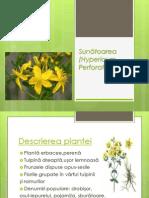 Sunătoarea (Hypericum Perforatum)