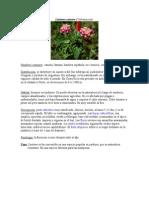 Jardín plantas para mariposas