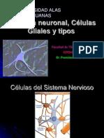 Citologia Neuronal- Neuroglia