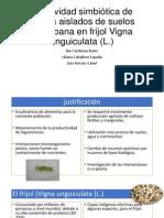 Efectividad simbiótica de rizobia aislados de suelos