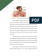 Anatomi pernapasan