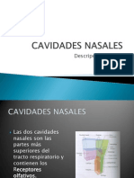 CAVIDADES-NASALES