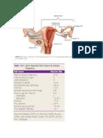 Ectopic Pregnancy Williams