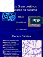 bacilosgrampositivosformadoresdeesporas