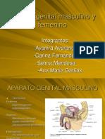 Aparato Genital Masculino u Femenino