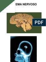 Aula 6, 7 e 8 -Fisiologia Sistema Nervoso