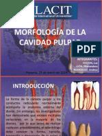 Anatomía pulpar y radicular final