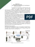 Sistematica e hipótesis evolutivas en musgos