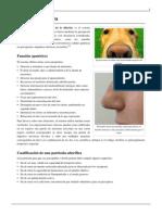 Sistema Olfativo.pdf 4