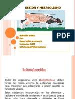 Digestion y Metabolismo Tpem