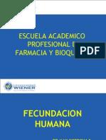 Fecundacion Humana 2014 m
