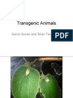 honors 396 spring - transgenic animals pptx