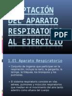 Adaptación del aparato respiratorio al ejercicio