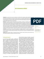 el paradigma reticular de la memoria cortical.pdf