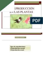 Ppt Reproduccion de Las Plantas