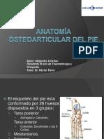 Anatomía osteoarticular del pie