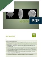UD 2. Tema 3. División Euglenophyta