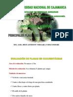 PLAGAS DE CUCURBITÁCEAS