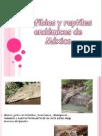 Anfibios y Reptiles Endemicos de Mexico