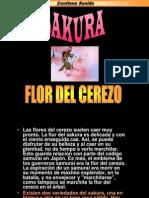 Sakura-flo Del Cerezo (1)