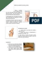 Lesiones Del Ligamento Colateral Lateral