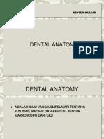 Anatomi Gigi Perkembangan Gigi