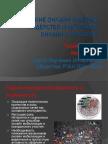 Кто такие онлайн-лидеры? Лидерство и активизм онлайн и оффлайн / Т. Индина, И. Климов