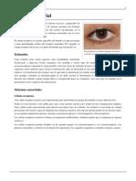 Sistema Sensorial.pdf 3