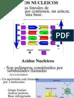 acidos_nucleicos,_nucleo_2012
