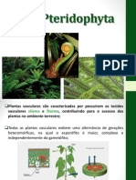 Botanica e Sistematica Vegetal Aula 10092013 Pteridofitas