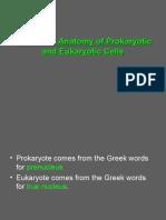 Prokaryotic & Eukaryotic Cells- 3