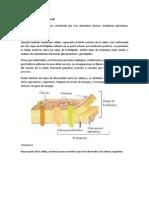 1.1 Estructura Celular