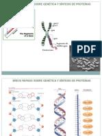 ADN Recombinante-fermentaciones Industriales