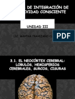 3.1 Neocortex Cerebral