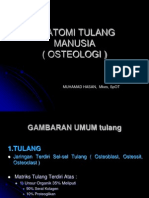 2. Anatomi Tulang Manusia ( Osteologi )