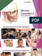 12parescranealesii-131015192404-phpapp01