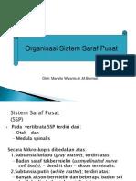 Organisasi SSP,BO,MS