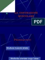 6T - La Contrazione Muscolare
