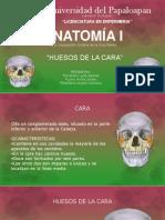 Diapositivas de Los Huesos de La Cara