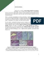 Curs 1_MD IV Odontogeneza
