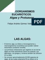 Algas y Protozoos