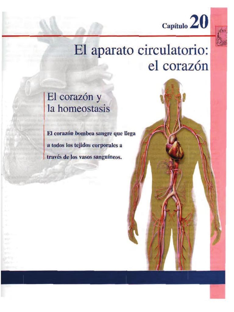 Increíble Anatomía Y Fisiología Capítulo 1 Become Bandera - Imágenes ...