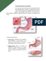 Ulceras pépticas final