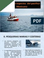Principales Especies Del Pacifico Mexicano