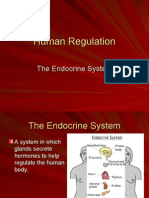 Human Regulation Endocrine