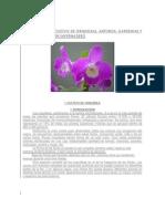Orquideas en Invernadero
