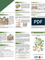 Recomendaciones básicas para el cultivo de hortalizas