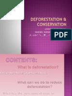 Deforestation & Conservation Efforts
