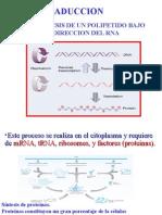 ácidos nucleicos part2