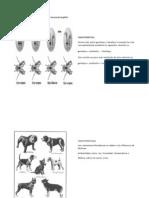 Variación fenotípica en los omatidios de moscas drosophila